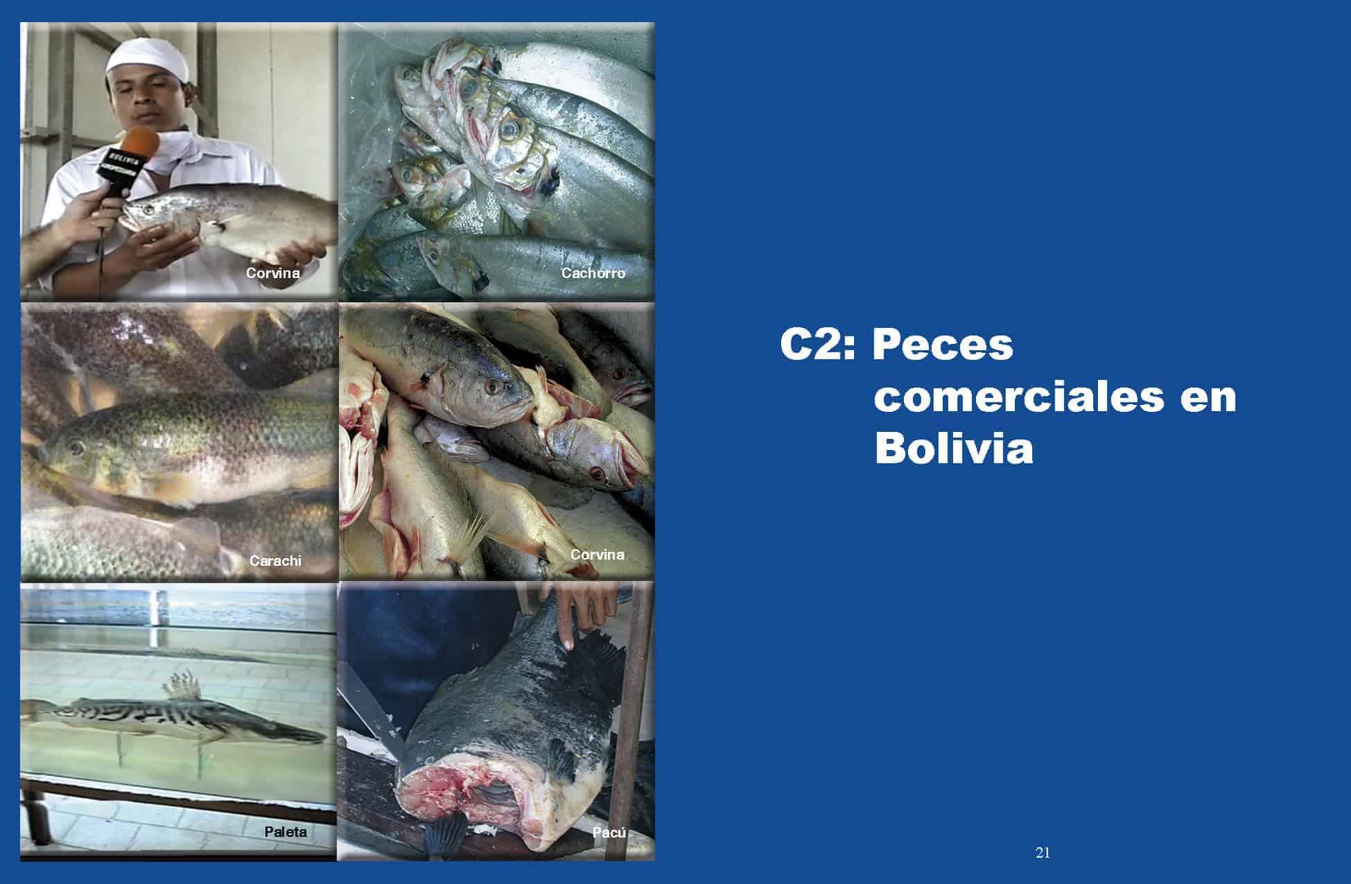Peces Comerciales en Bolivia