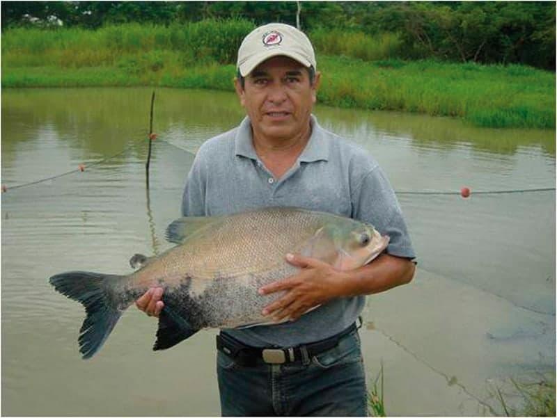 Dr. Luís Torres Velasco. Experto en pesca y piscicultura, sosteniendo un pacú criado en el CIRA.