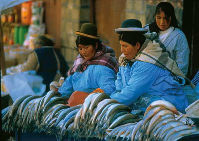 Pejerrey del lago Titicaca. La Paz.