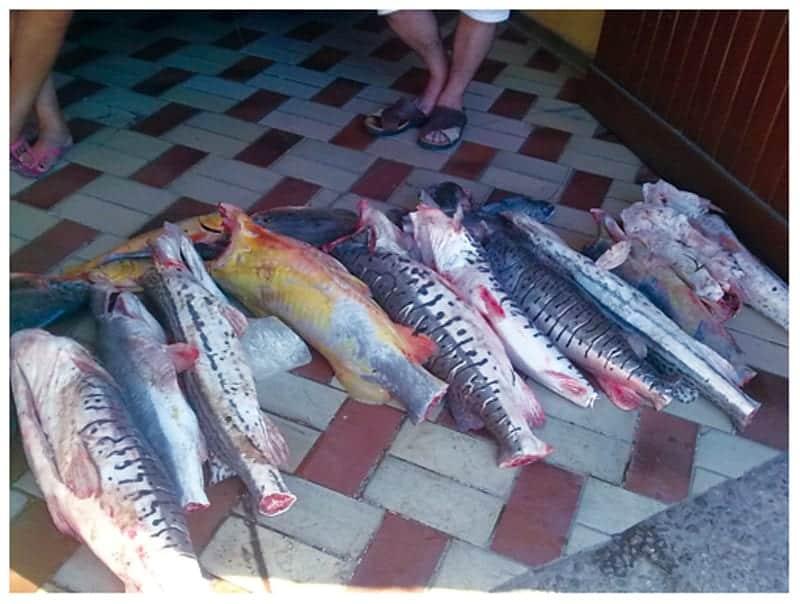 Pesca deportiva en Santa Cruz.
