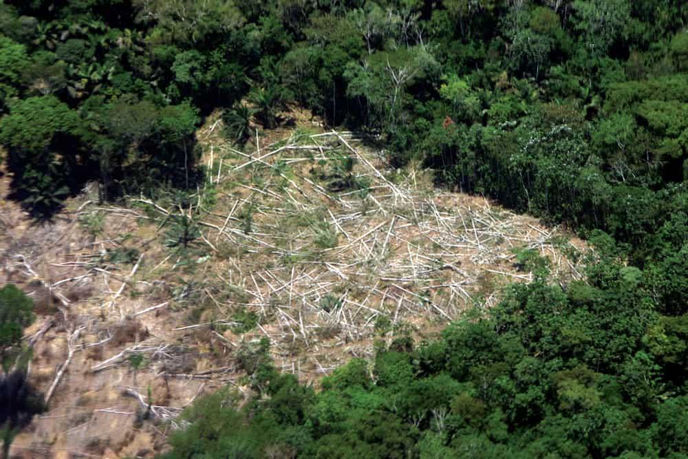 Deforestación en Pilon Lajas