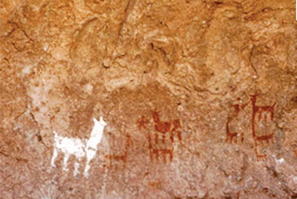Arte rupestre de camélidos del 2500 a.C. a 4500m.s.n.m. Cala Cala. Oruro.