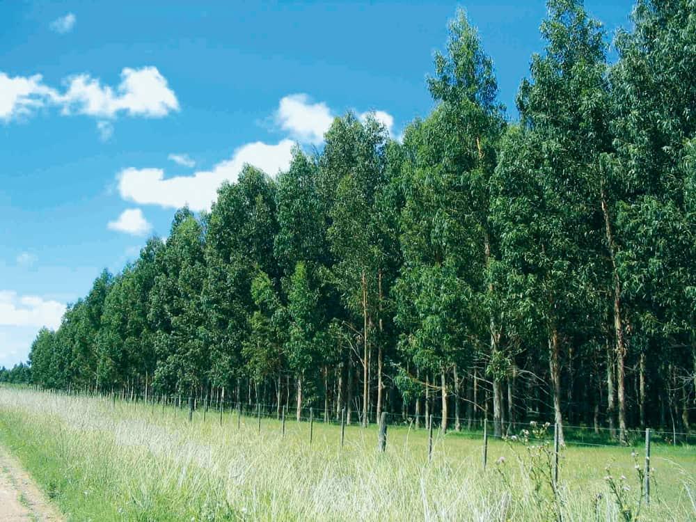 Plantaciones certificadas en el Chapare, Cochabamba.