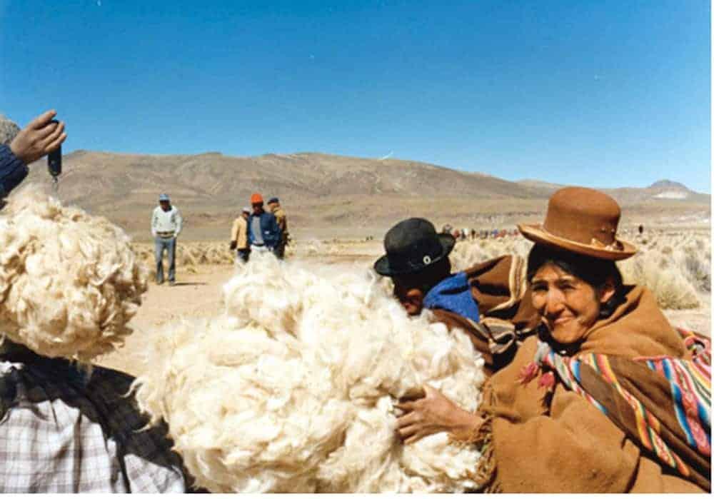 lana esquilada alpaca