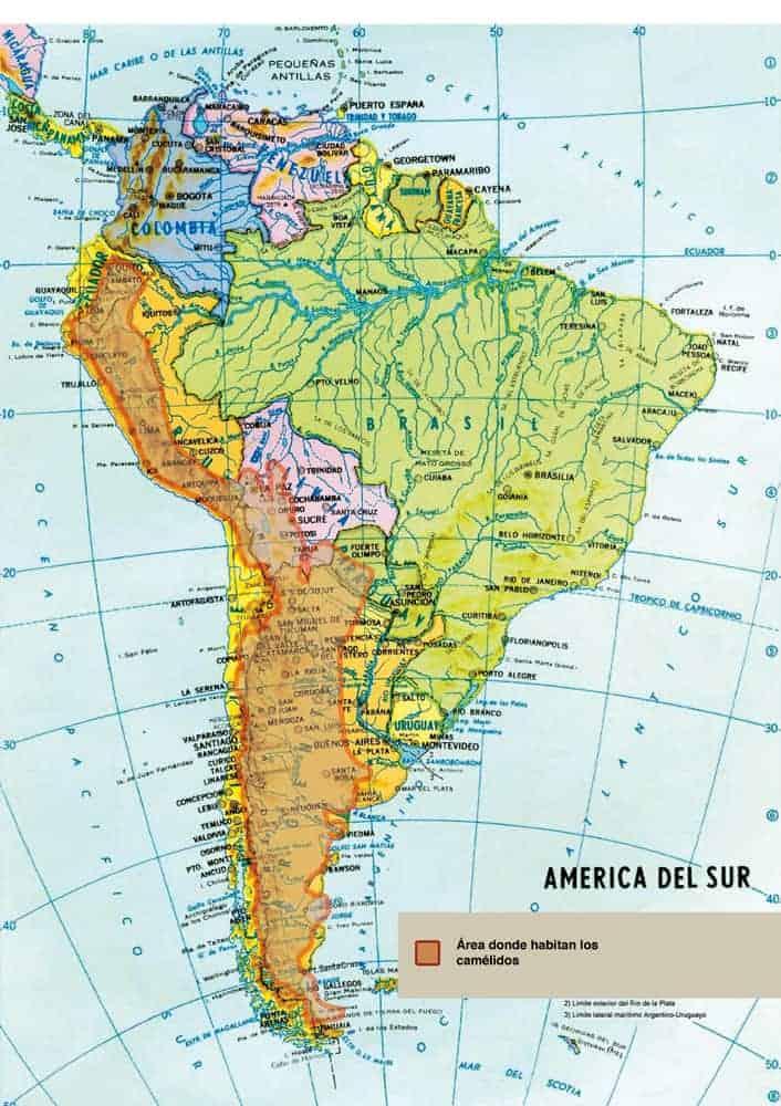 Mapa de Sud América que muestra donde habitan los camélidos