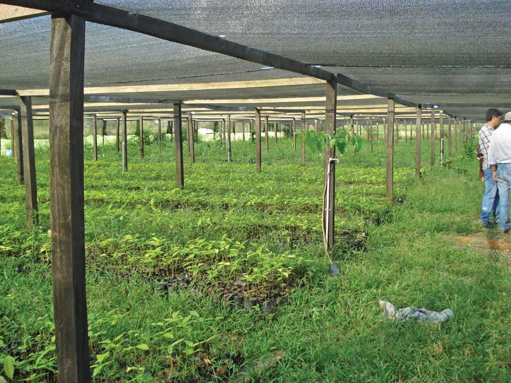 Vivero forestal del Fondo Nacional de Desarrollo Forestal (FONABOSQUE).