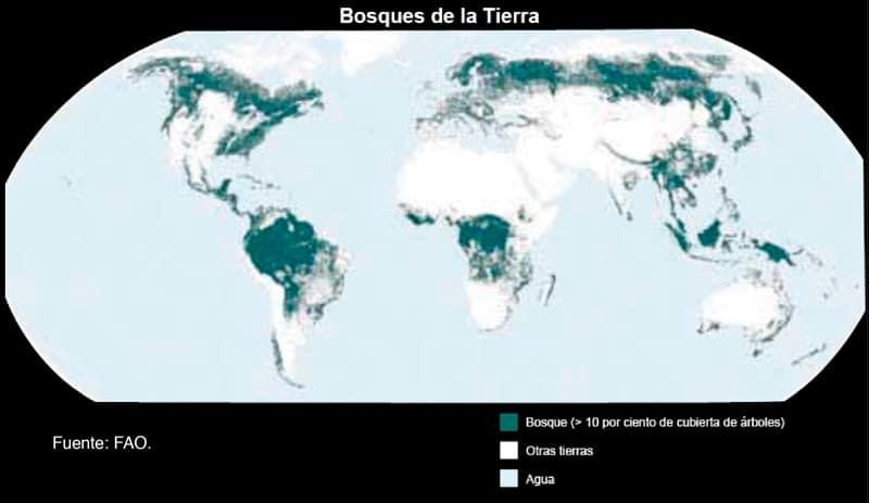 Bosques de la Tierra