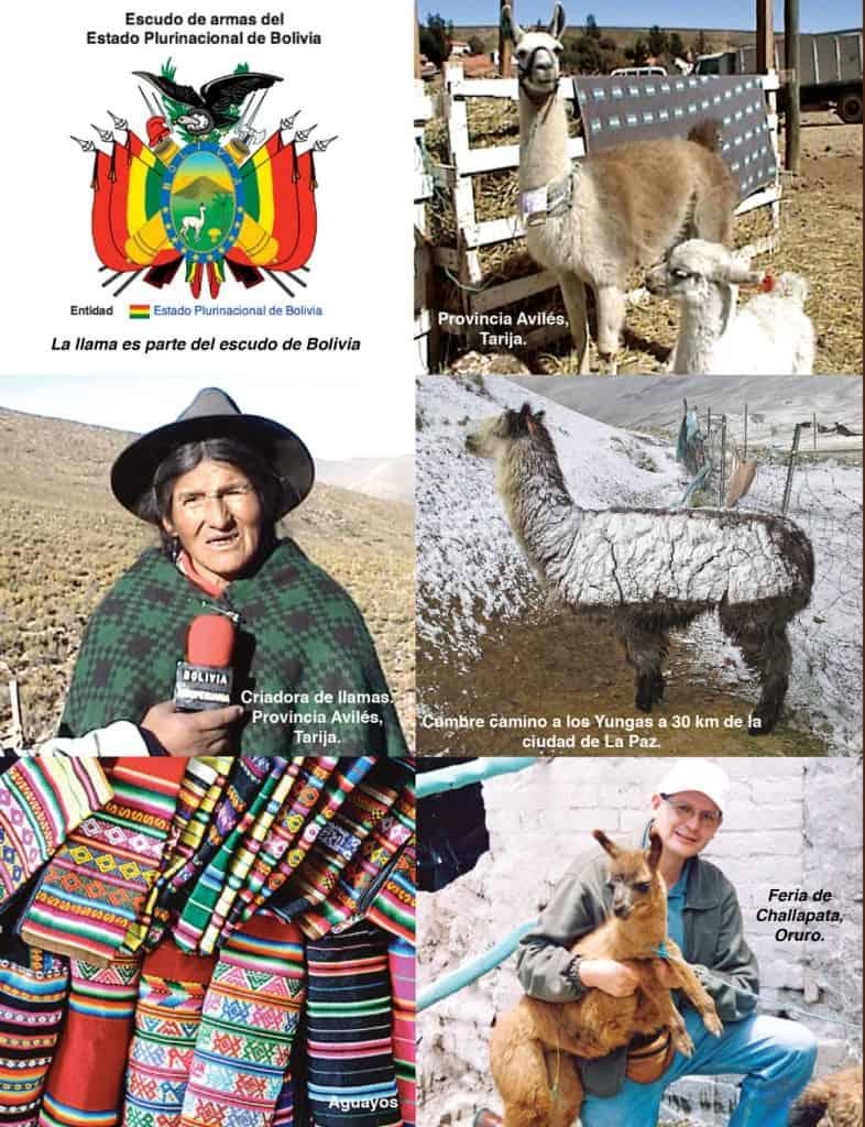 Llamas en Bolivia