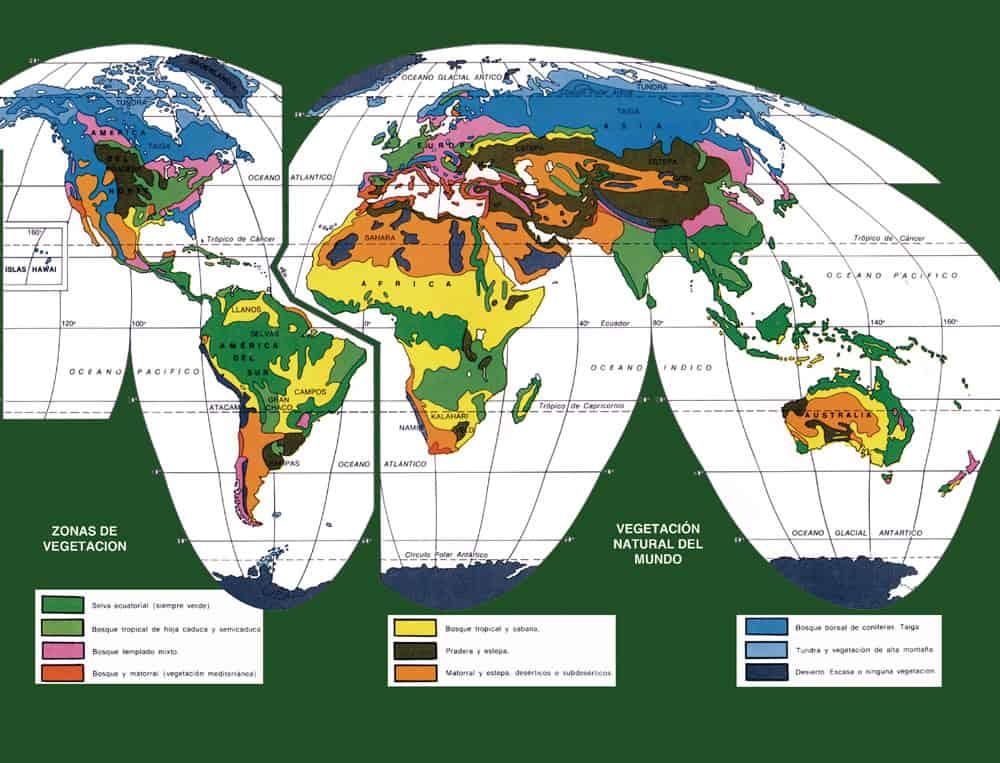 Mapa de Vegetación en el Mundo