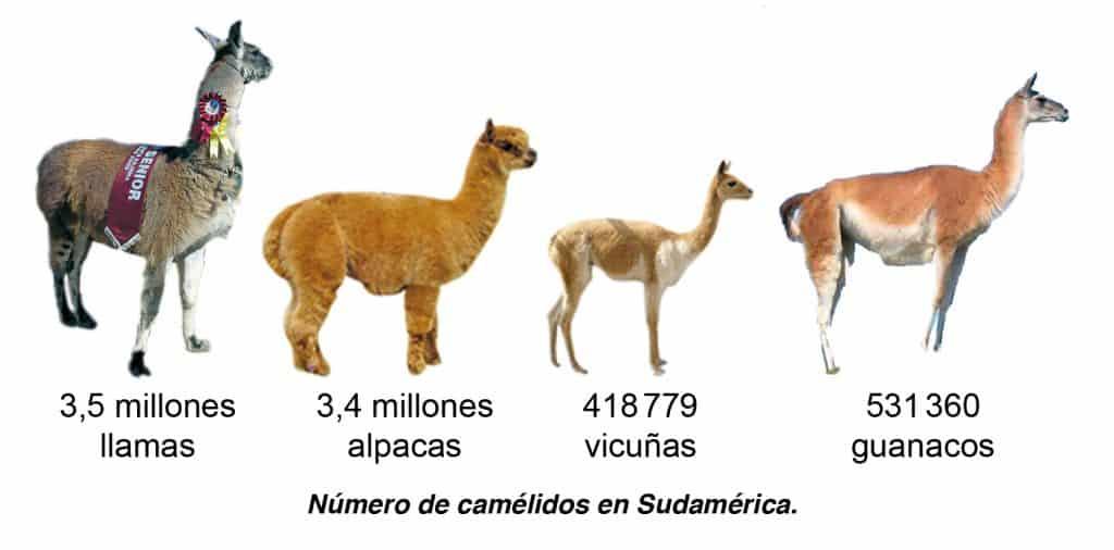 Número de Camélidos en Sud América