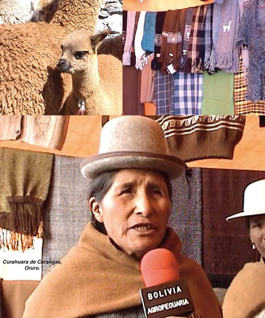 Producción de Camélidos en Oruro