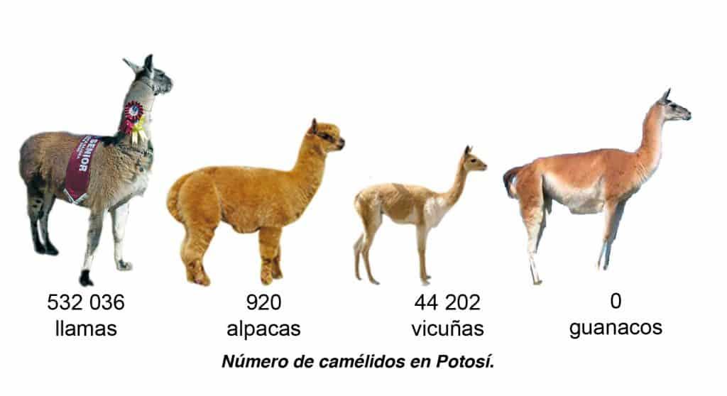 Número de camélidos en Potosí.