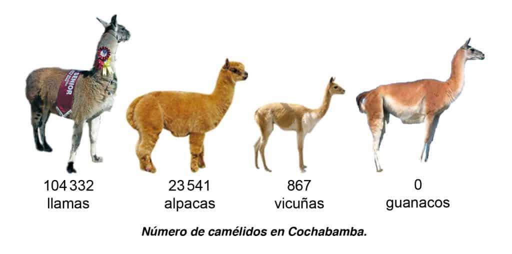 Número de camélidos en Cochabamba.