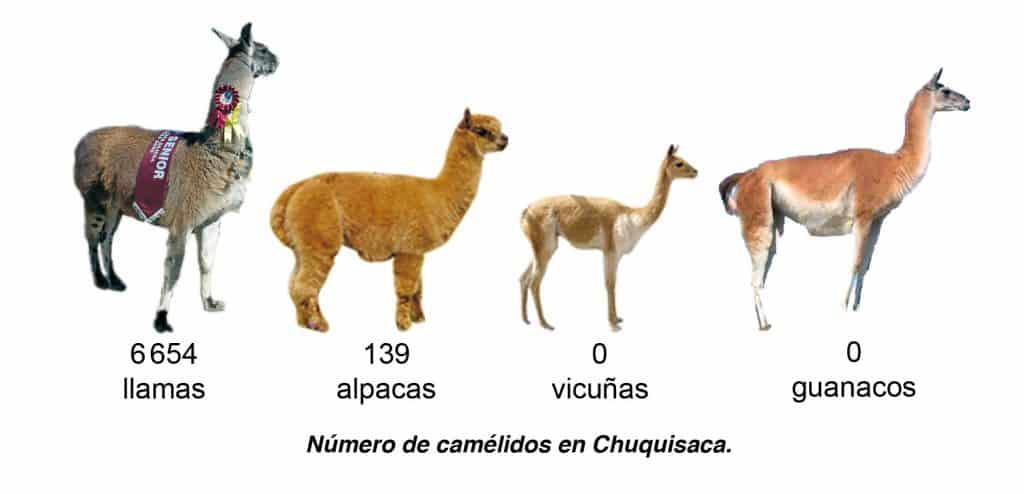 Número de camélidos en Chuquisaca.