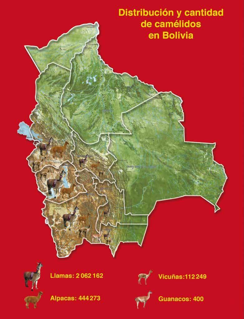 Mapa: Distribución y Cantidad de Camélidos en Bolivia