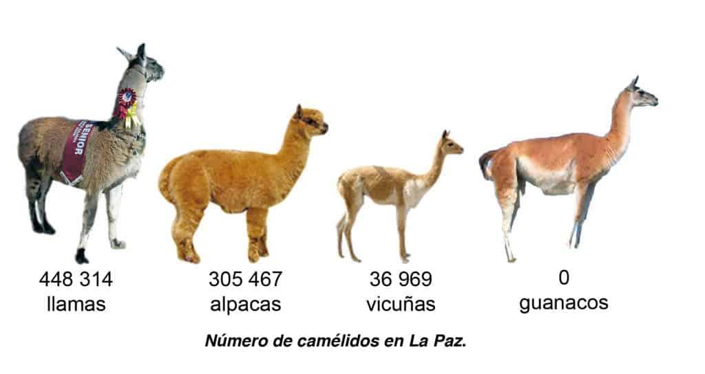 Número de camélidos en La Paz.